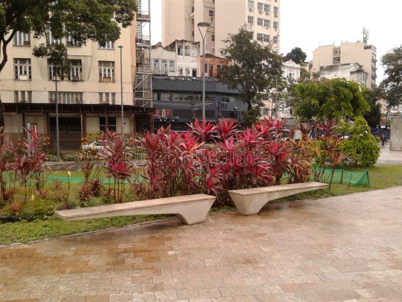 Plants in Maua square Rio de Janeiro Downtown Brazil. Plants in Maua square Rio de Janeiro Downtown. Wet floor, square, rainy day, plants, trees, landscape royalty free stock photo