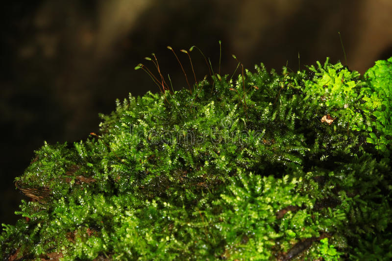 Plants and moss plant in pot. Indoor Plants and moss plant in pot stock photos