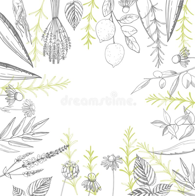 Plants for natural cosmetics. Organic cosmetics background. Vector illustration. Plants for natural cosmetics . Organic cosmetics background. Vector illustration stock illustration