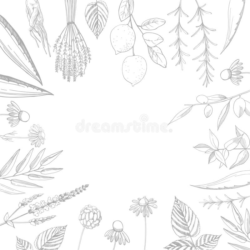 Plants for natural cosmetics. Organic cosmetics background. Vector illustration. Plants for natural cosmetics on a white background. Organic cosmetics background vector illustration