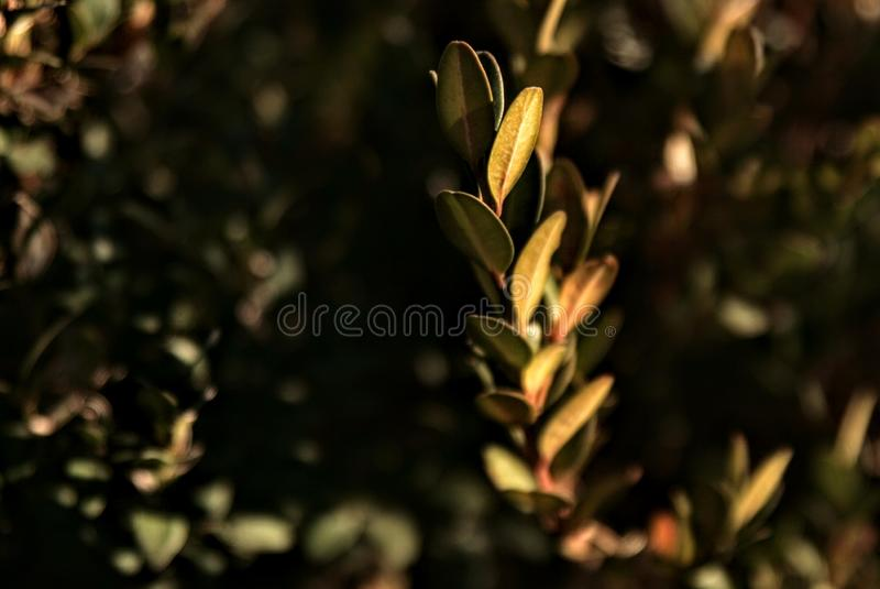 plants nature green leaves background contrast royalty free stock photography