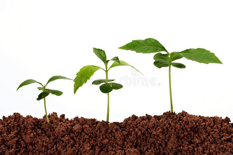 Plants-New lfie stock photography