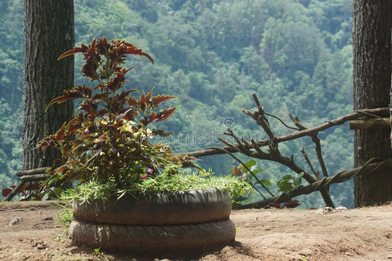 plants over wheel pots stock photography