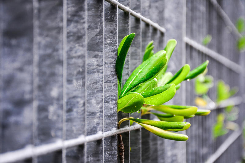 Plants in permanent struggle for survival stock images