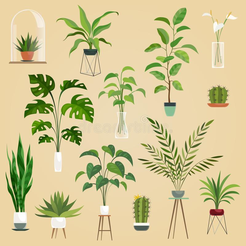 Plants in pots. Houseplant, succulent plants. Ficus planting in flowerpots vector isolated collection stock illustration