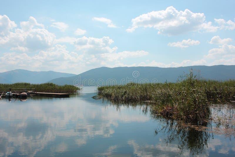 Plants at Prespes Lake Florina northern Greece. Europe stock images