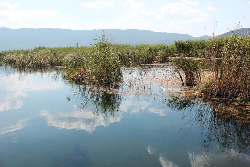 Plants at Prespes Lake Florina northern Greece. Europe royalty free stock images