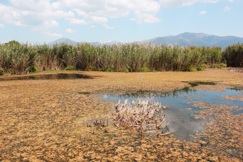 Plants at Prespes Lake Florina northern Greece. Europe royalty free stock photography
