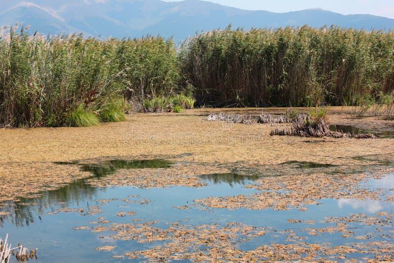 Plants at Prespes Lake Florina northern Greece. Europe stock photos