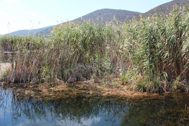 Plants at Prespes Lake Florina northern Greece. Europe royalty free stock photo
