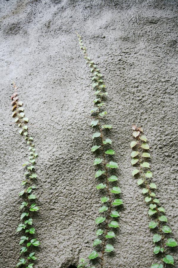 Plants Reaching Upwards Stock Photos