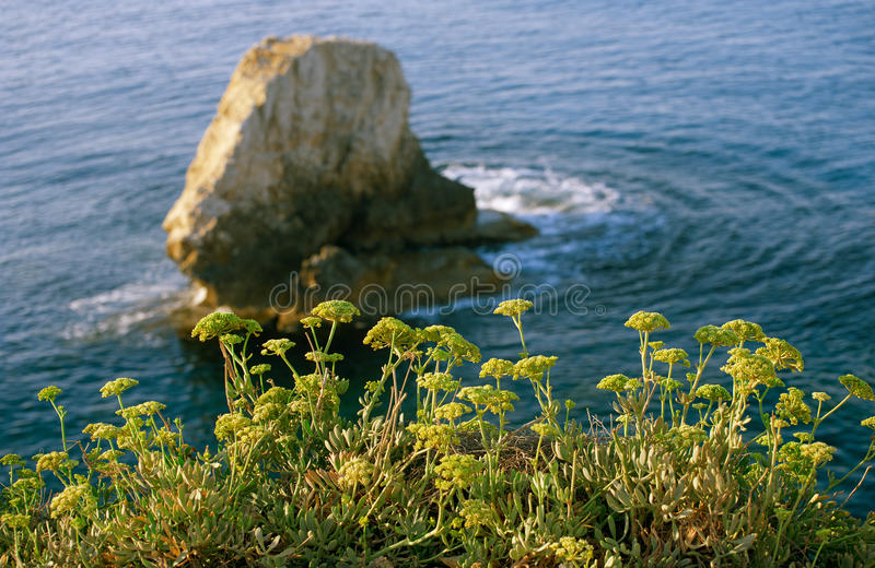 Plants on seacoast against the backdrop of cliffs royalty free stock photos