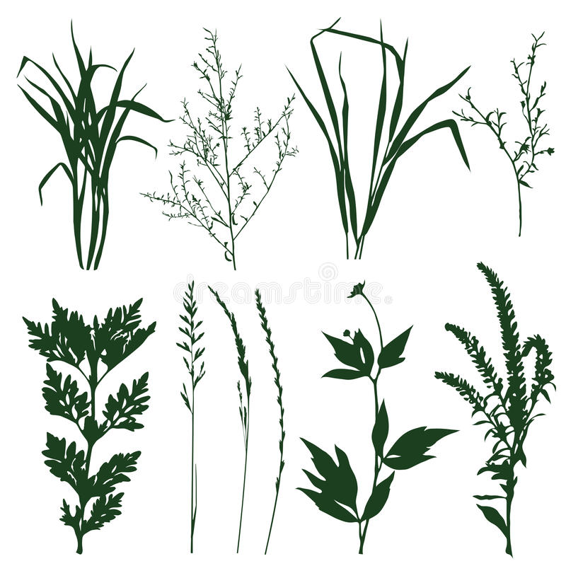 Plants. Silhouettes of decorative elements of grass and twigs stock illustration