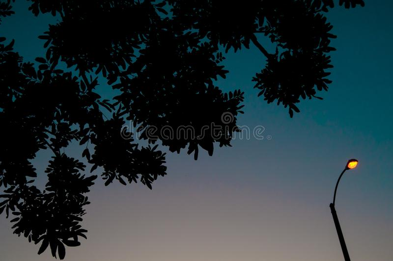 Plants on the sky of Long Beach, California. California is known with a good wether located in United States In summer time, inter. National royalty free stock image