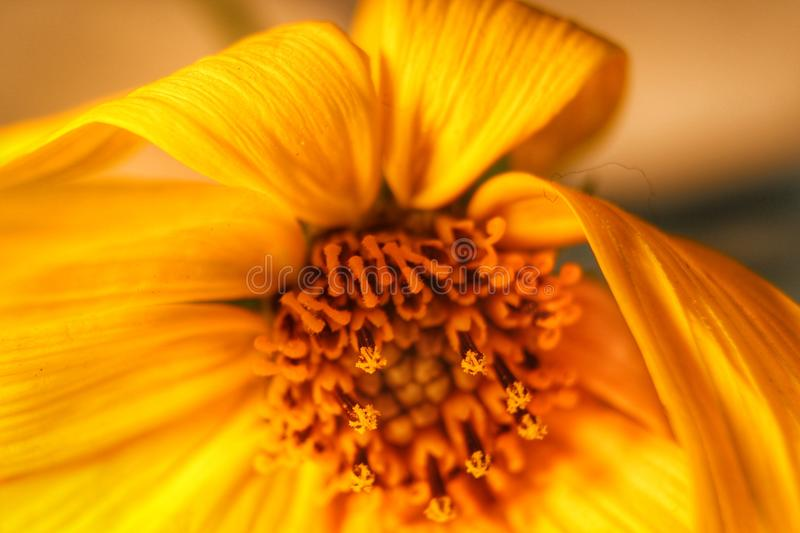 Plants small species yellow royalty free stock photo