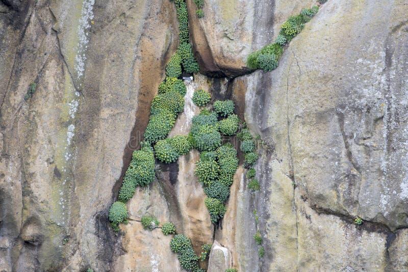 Plants on steep cliffs stock image