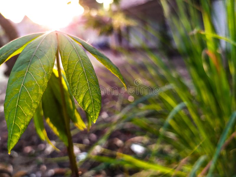 Plants and sunrise royalty free stock photos