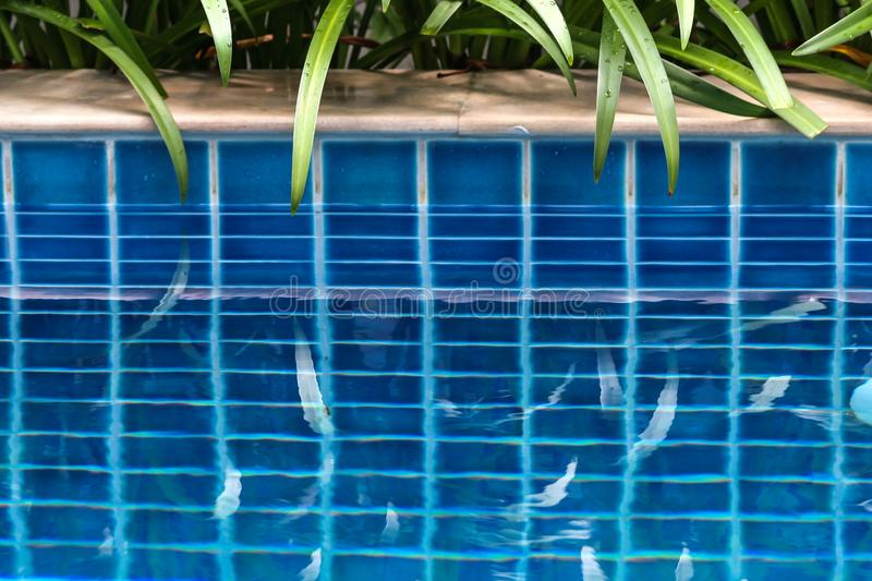 Plants by the swimming pool and there reflections in the water.Swimming pool surrounded of palm trees in the yard of villa. royalty free stock photography