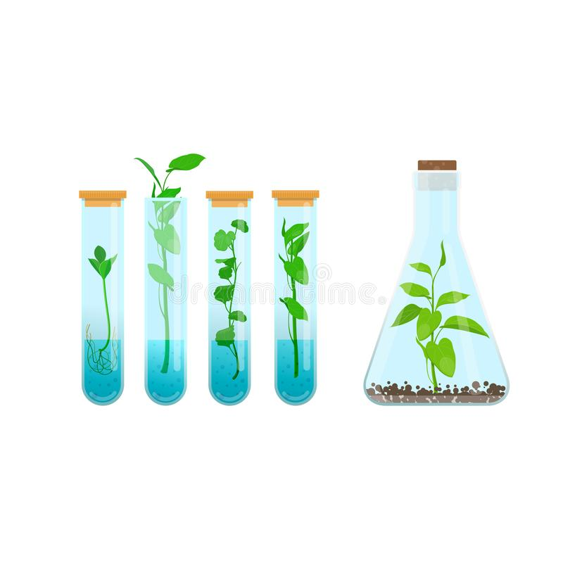 Plants in test tubes royalty free illustration
