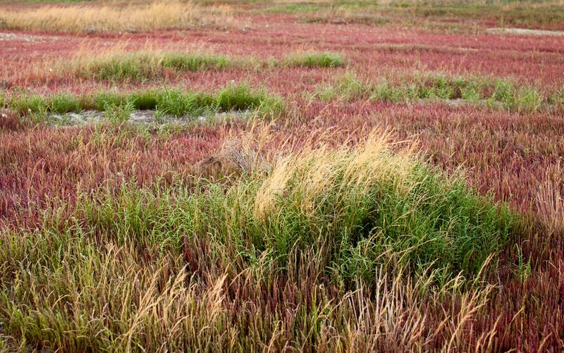Algae and grass on a dried estuary royalty free stock image