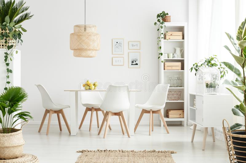 Plants in white dining room. Plants and lamp in white dining room interior with chairs at wooden table with apples and posters on the wall royalty free stock image