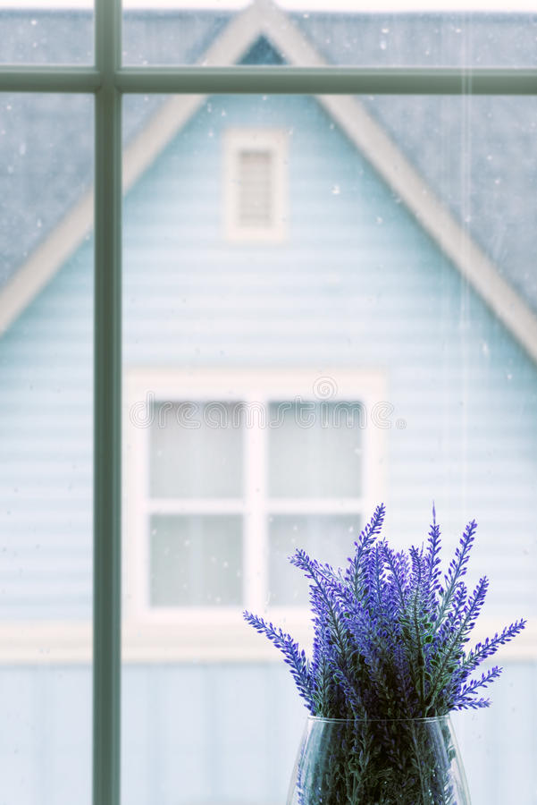 Plants at Window royalty free stock images