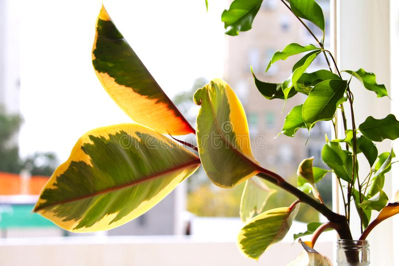 Plants on a windowsill royalty free stock photo