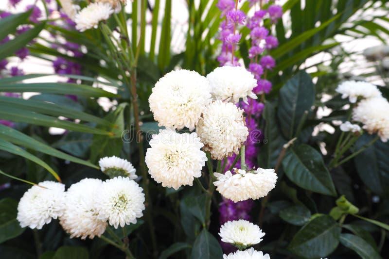 Plantsandflowers стоковое изображение