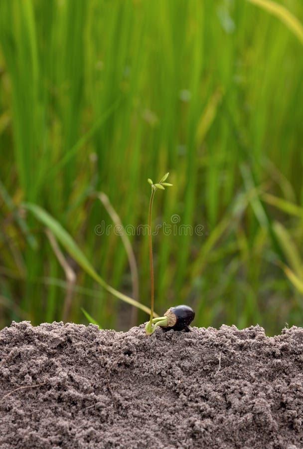 Plantula che cresce sull'idea di concetto della terra verde fotografia stock