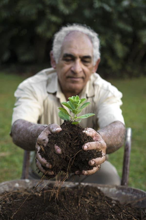 Plantula della tenuta dell'uomo senior ecologicamente in suolo sopra una carriola immagini stock