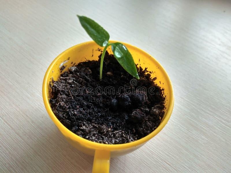 Plantula di verde della primavera fotografia stock