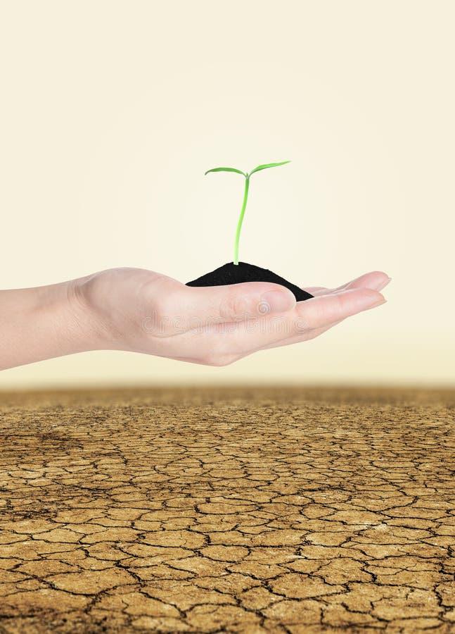Plantula a disposizione sopra terra immagine stock