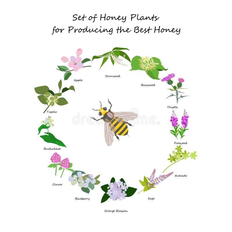 Planty ajustou-se produsing o melhor mel ilustração stock