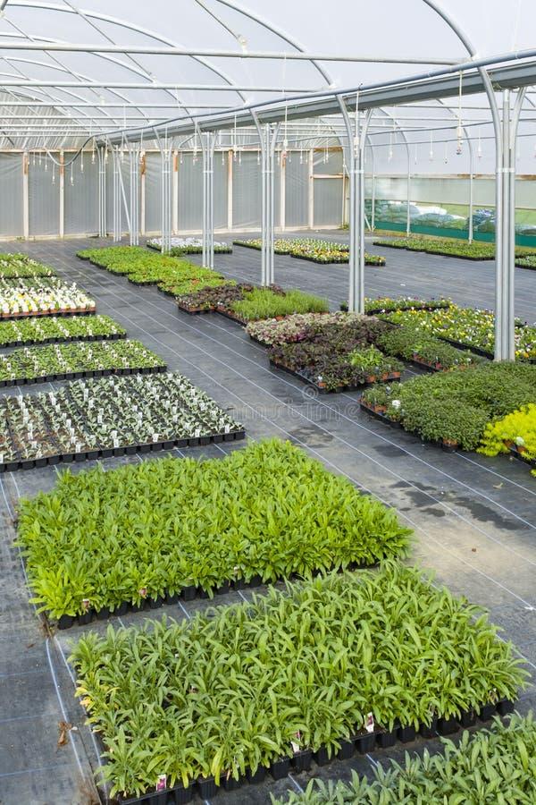 Plantzaailingen in kwekerijkassen royalty-vrije stock fotografie