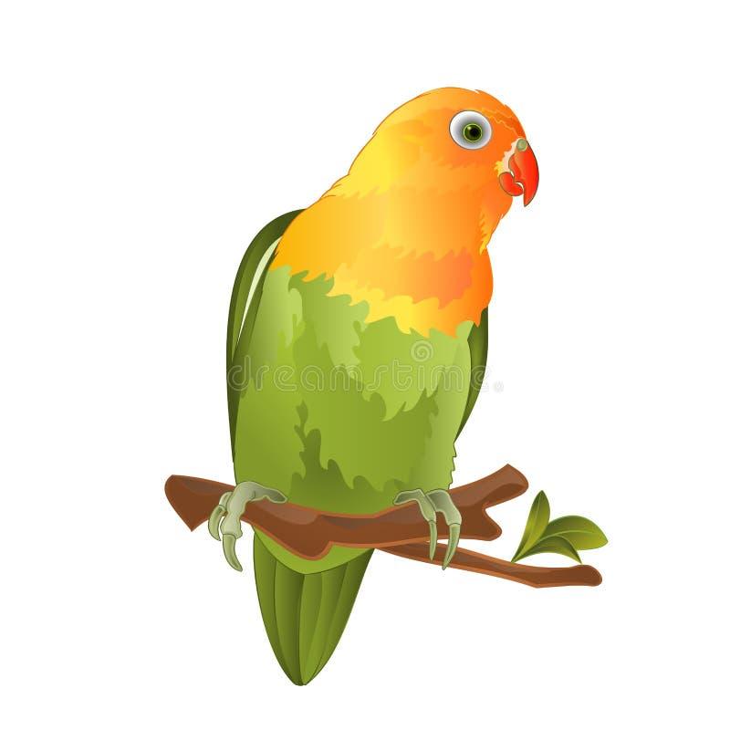 Plappern Sie den tropischen Vogel des Agaporniswellensittichs nach, der auf einer Niederlassung auf einer weißen editable Hinterg vektor abbildung