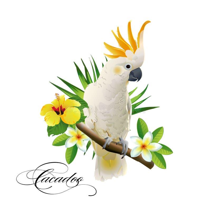 Plappern Sie Kakadu auf den tropischen Niederlassungen mit Blättern und Blumen auf weißem Hintergrund nach lizenzfreie abbildung