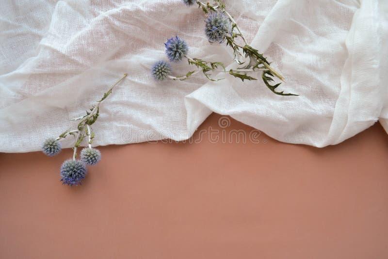 Plaque plate de gaze et fleurs de planum érythénique sèches image stock