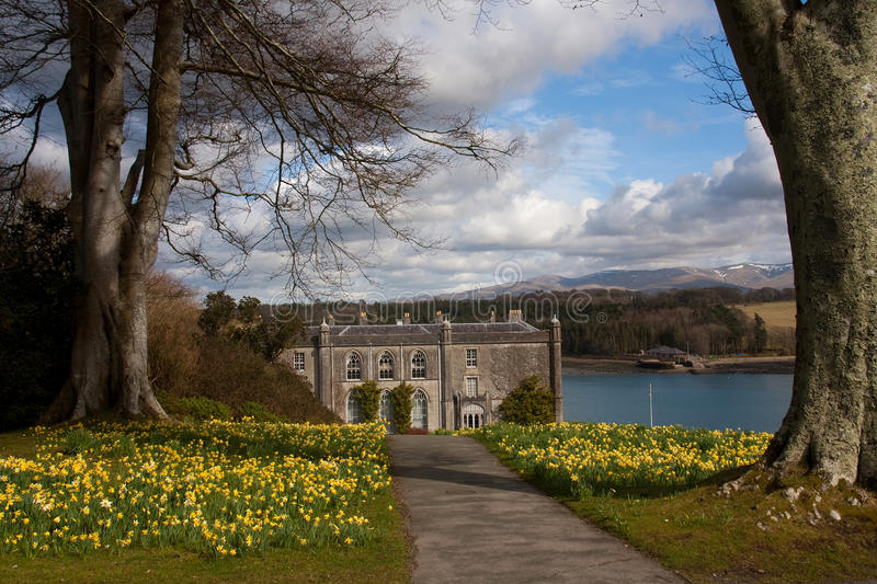 Plas Newdd. Daffodils a historic house situated on the Menai Straits on the Isle of Anglesey stock photos