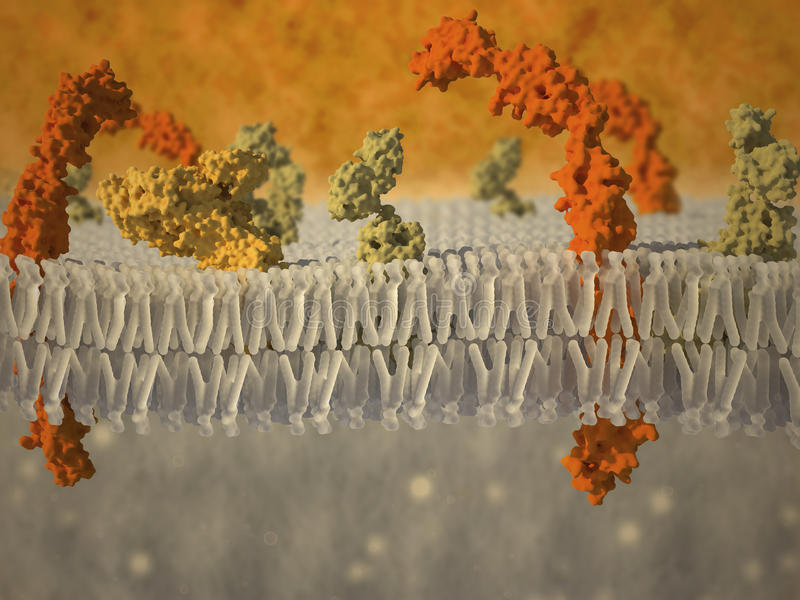 Plasmamembrane einer Zelle mit verbundenen Proteinen stock abbildung