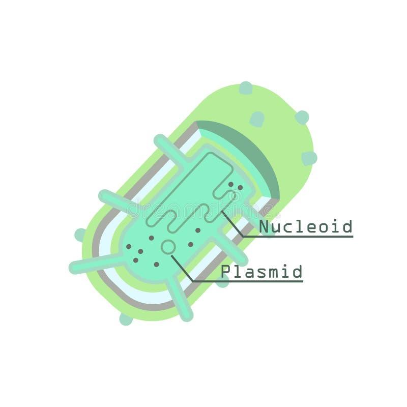 Plasmide in cellula batterica illustrazione vettoriale