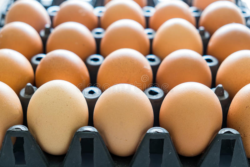 Plast- bunt för äggmagasinsvart royaltyfri foto