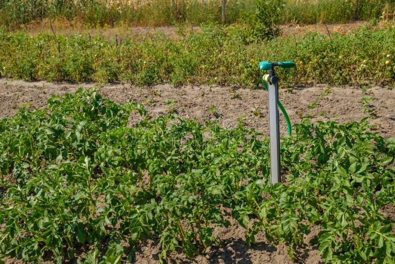 Plast- rörsystem för bärbar trädgård med en monterad duschsprejare arkivbilder