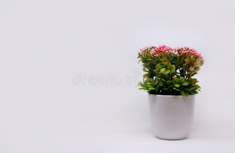 Plast- växt som isoleras på grå bakgrund royaltyfri fotografi