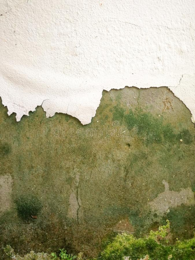 Plaster wall showing moss stock photos