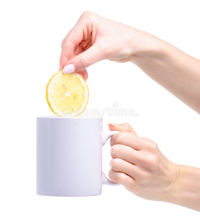 Plasterek cytryna stawiająca w białym filiżanka kubku herbata zdjęcia stock