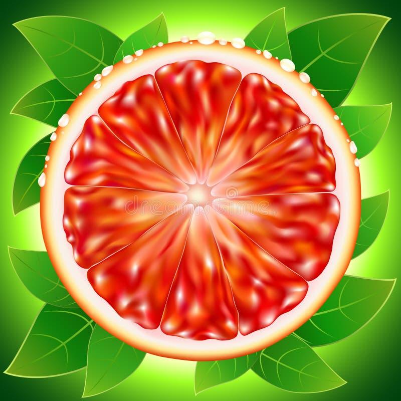 Plasterka dojrzały grapefruitowy z kropli wodą ilustracja wektor