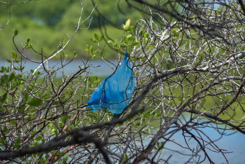 Plastic bag pollution. A plastic bag pollution on a tree in coastal area stock photo
