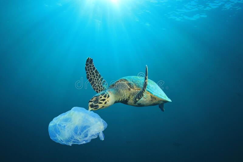 Plastic pollutes the sea with Turtle royalty free stock images