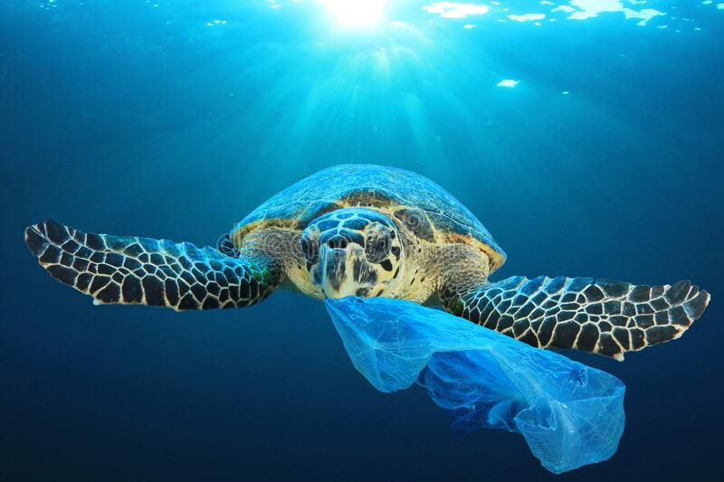 Plastic pollutes the sea with Turtle stock photos