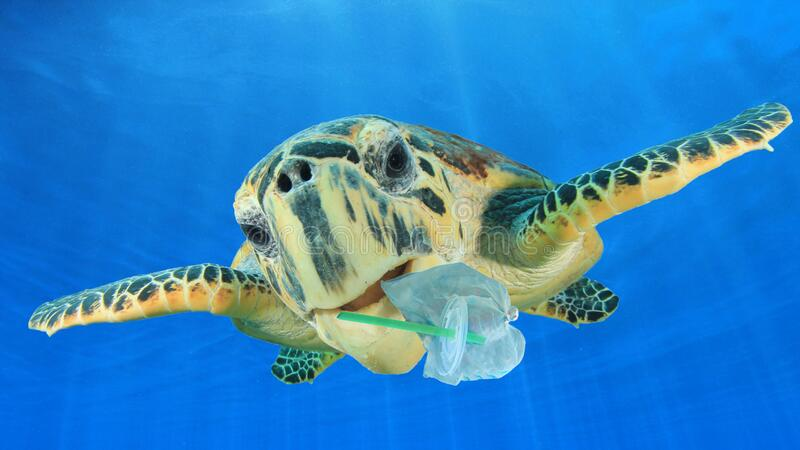 Plastic pollutes the sea with Turtle royalty free stock photo